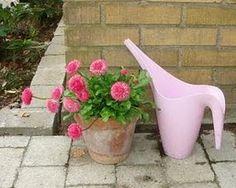 Bellis er en af de tidligst blomstrende sommerblomster. Den fås i hvid og forskellige røde nuancer. De pompom-formede blomster holder sig pæne længe, og bellis blomstrer til højsommer, hvis man klipper de visne blomster af. Til sidst bliver bellis dog ranglet og blomsterne bliver mindre – så er det tid at skifte den ud. Bellis er to-årig, så man kan plante den ud i haven og få glæde af den næste forår.