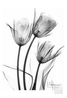 Tulip Arrangement in Black and White Art Print by Albert Koetsier at Art.com