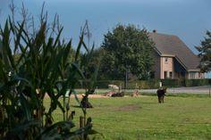 """Vanmiddag een leuk gesprek gehad bij Bed & Breakfast """"Op 7"""". Bed en Breakfast """"Op 7"""" bevindt zich centraal in de provincie Drenthe aan de rand van het dorp Hooghalen. Rustig gelegen in een bosrijke omgeving met uitzicht over groene weilanden. http://koopplein.nl/middendrenthe/gebruikers/323203/jannie-klaassens"""