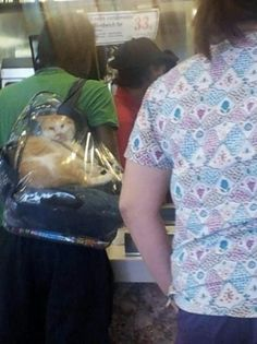 Carry-On fail. He is at a fricken restaurant like what do you mean carry on fail you suck Can't Stop Laughing, Laughing So Hard, Crazy Cat Lady, Crazy Cats, Hate Cats, Humor, Cat Humour, I Love To Laugh, Funny Cute