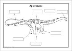 Dinosaur labelling worksheets (SB10009) - SparkleBox