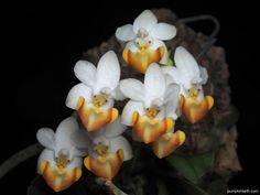 Phalaenopsis Orchid, Orchid Plants, Orchid Propagation, Miniature Orchids, Terrariums, Orange Flowers, Indoor Plants, House Plants, Beautiful Homes