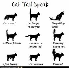 Fun #Cat Facts - tail speak