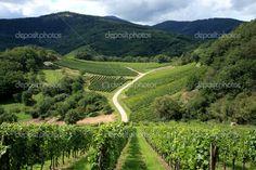 French Vineyard....