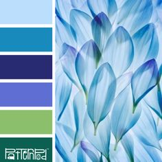 55f6f0283 Periwinkle Petals Love these colors for a beach house retreat.