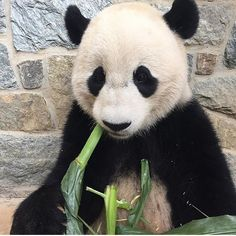 This update was written by Mike Maslanka, head of the Department of Nutrition… Cute Little Animals, Panda Bear, Pet Birds, Zoos, Humility, Bison, Aquariums, Badger, Donkey