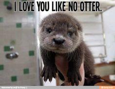 #otter