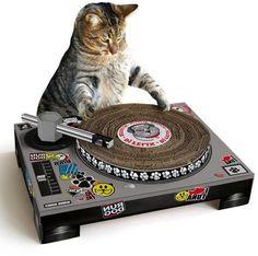 cat dj whilst having a good scratch cat scratch cardboard dj turntable ...