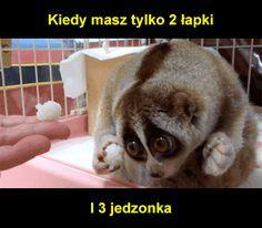 http://i1.kwejk.pl/k/obrazki/2016/10/bb0832b86da4d92b3e13cd7da01fe11a.gif