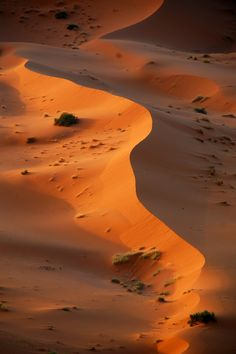 Sunrise in the desert, Merzouga, Morocco (by lubow)