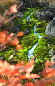 """""""Moss park in Gunma, Japan"""" The Beautiful Country, Beautiful Places, Beautiful Landscapes, Beautiful Gardens, Places Around The World, Around The Worlds, Places To Travel, Places To Visit, Tokyo"""