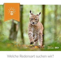 Welche Redensart suchen wir? Fox, Cats, Animals, Animales, Gatos, Animaux, Animal, Cat, Animais