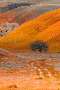 Wind Wolves Preserve, Bakersfield, California.  Pinned by www.CaliforniasHarvest.com