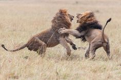 Please vote for this entry in Win a safari at Entim Camp in our wildlife photo contest!!