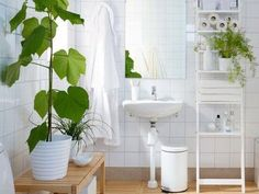 8 'shower plants' that want to live in your bathroom