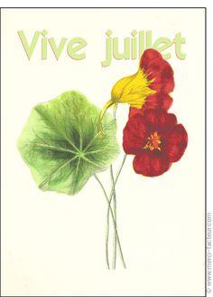 #carte #juillet #été #vacances #soleil  Carte Vive Juillet et jolie fleur pour envoyer par La Poste, sur Merci-Facteur !