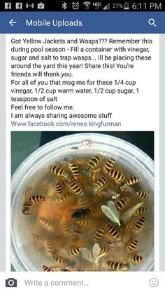 15 Clever Ways to Get Rid of Bugs is part of Wasp traps - If you're tired of scratching and swatting your way through summer, get to work on one of these clever ways to get rid of bugs Simple Life Hacks, Useful Life Hacks, Wasp Traps, Bee Traps, Home Hacks, Diy Hacks, Home Remedies, Natural Remedies, Good To Know
