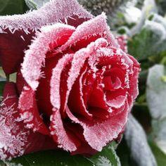 Inspirasjon – Min Oase Diy Wreath, Wreaths, Advent, Tips, Flowers, Plants, Christmas, Home Decor, Do Crafts