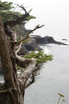 Hike of the Week: Oswald West State Park, Oregon | Gardenista