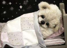 Bear necessities by jewell Best Teddy Bear, Teddy Bear Day, Teddy Bear Gifts, Cute Teddy Bears, Monkey Doll, Bear Doll, Teddy Beer, Jenny Johnson, Teddy Bear Pictures