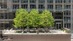 Morningstar Corporation Green Rooftop