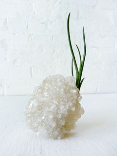 Air Plant Tree on India Crystal Garden - Popcorn Cluster.