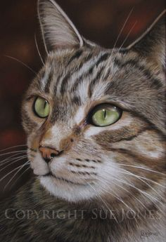 Alfie by Sue Jones