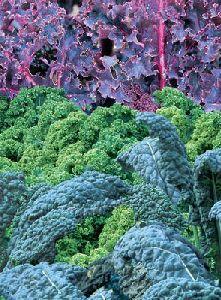 4 ways to enjoy Kale…