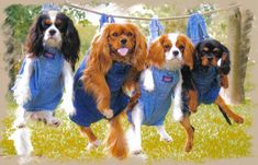 They hung us out to dry! ( I need a picture with Cinnamon like this! Perfect for the country!!)