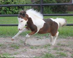 Gentle Carousel Miniature therap horses