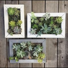 7 Victorious Clever Tips: Artificial Grass Circle artificial plants decoration cas.Artificial Plants Wall Outdoor artificial flowers for outside. Succulent Wall Planter, Succulent Cuttings, Wall Planters, Succulent Gardening, Succulent Plants, Cacti, Small Artificial Plants, Artificial Plant Wall, Artificial Flowers