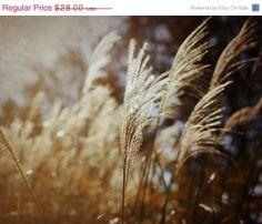 Oh gold! by photographybykarina on Etsy