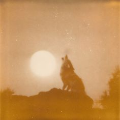 #moon #wolf #howl #sun #nature Get Informed with Worthy Readings. http://www.dailynewsmag.com