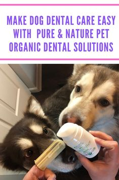 Make Dog Dental Care Easy with Pure & Natural Pet Organic Dental Solutions Looking for a way to make taking care of your dog's teeth even easier? See what we think of Pure and Nature Pet Organic Dental Solutions products here! Dog Dental Care, Pet Care, Dog Health Care, Oral Health, Health Tips, Tiny Dog Breeds, Best Dog Training, Crate Training, Dog Grooming