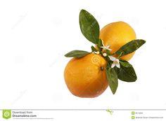 arancia frutti e fiori - Cerca con Google