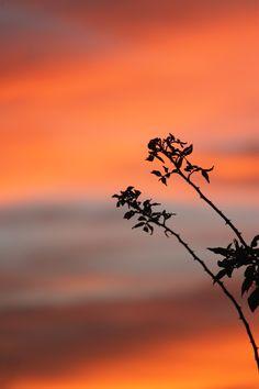 September 2012 sunset in the back garden