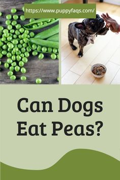 Peas are good for you and your dog. Learn more about this under-appreciated vegetable, including how to cook them so they're safe for both of you!