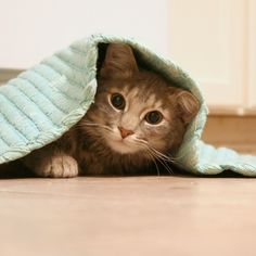 Missing Cat? Check These Popular Hiding Spots First