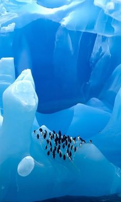 20 Photos That Will Make You Want to Visit Antarctica