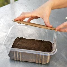 Growing Microgreens Indoors | Rodale's Organic Life