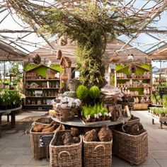 terrain at styer's in pennsylvania. it looks so neat! you can make terrariums for $15.