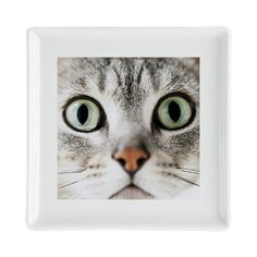 Cat, close-up - Square Cocktail Plate