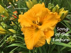 Song of the Empire - photo by HappyGoDaylily