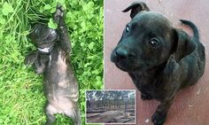 Man finds box of dead staffie puppies in a box on the side of the road