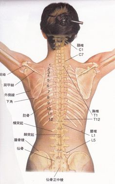 背中をほぐすということ の画像|アロマと整体の相乗効果♪