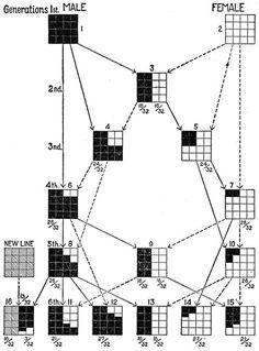 line breeding / inbreeding / outcrossing chart