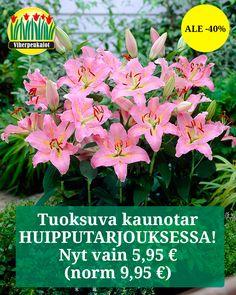 Norman, Oriental, Garden, Plants, Garten, Lawn And Garden, Gardens, Plant, Gardening