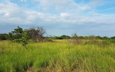 Sale Rio Hato Farm Land 1320000