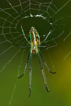 Fluorescent spider