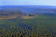 Васюганские болота порой называют «русской Амазонкой». Они растянулись на 573 км с запада на восток. Их площадь постоянно растет и уже превышает 53 тыс. кв. км (что больше площади Швейцарии).
